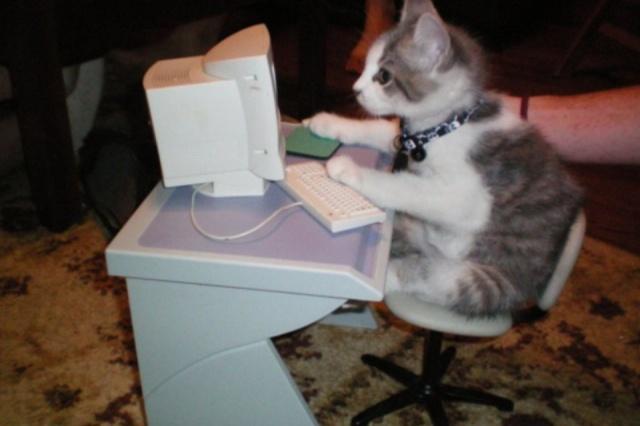 cat computer